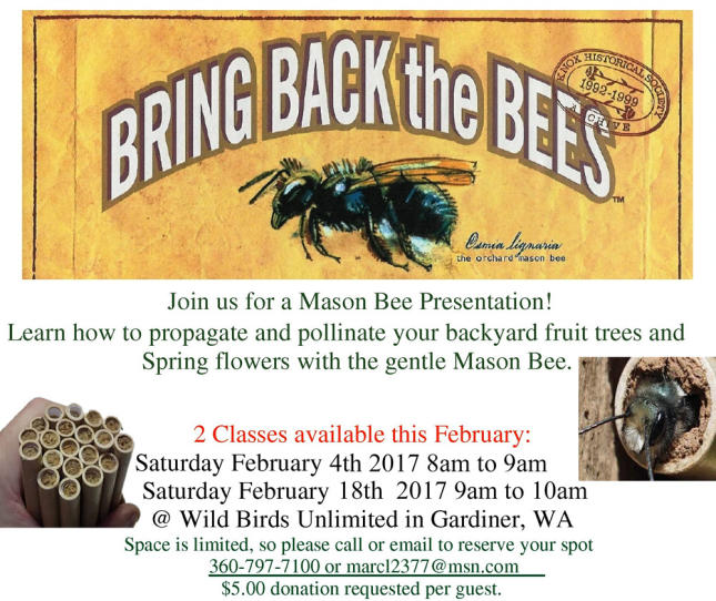 Mason Bee Class at Wild Birds Unlimited