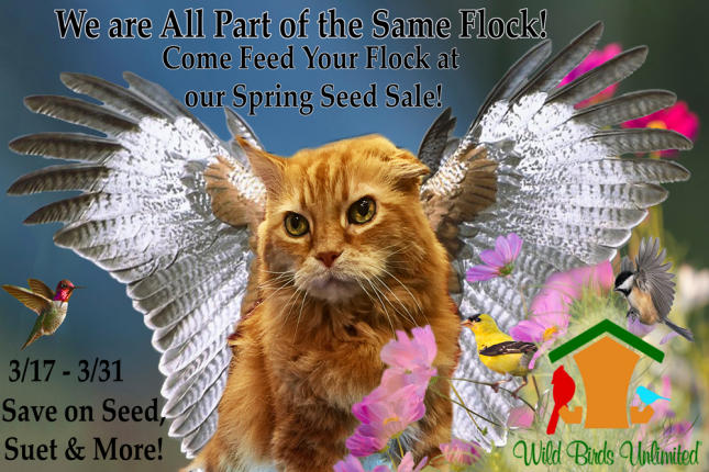 We are all part of the same flock - spring seed sale 2017
