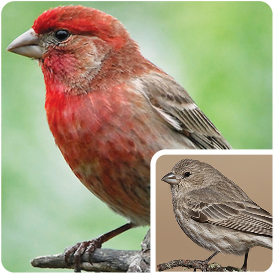 Wild Birds Unlimited - Nature Shop