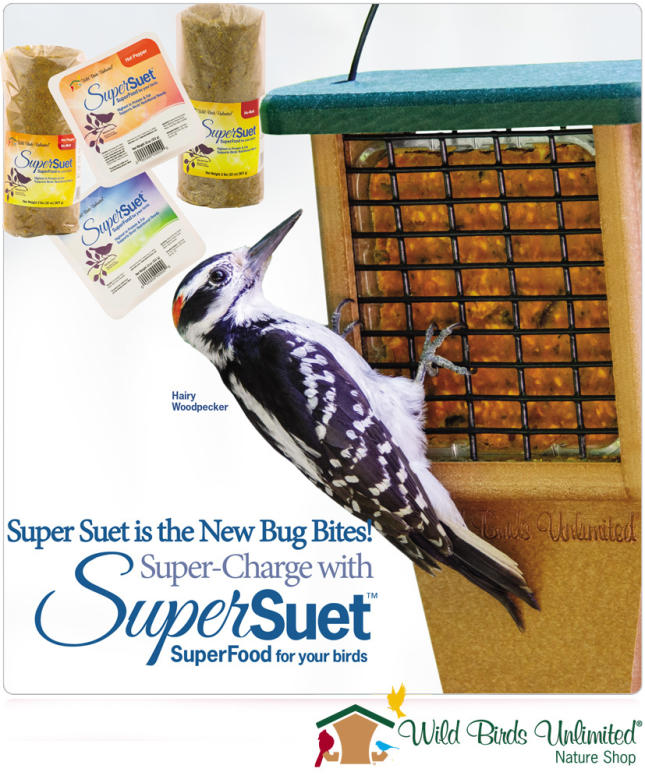 super suet is the new bug bites